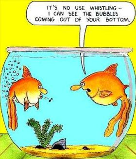 gold-fish-farting-in-water