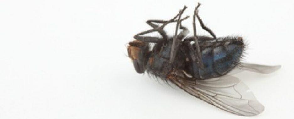 cropped-dead-fly.jpg