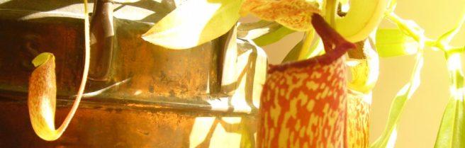 cropped-p1120294.jpg