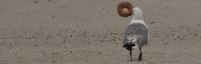 cropped-seagull-bagel1.jpg