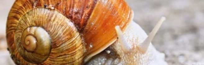 cropped-fat-snail.jpg